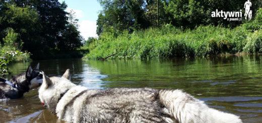 Bolimowski Park Krajobrazowy dla Aktywnych z psami