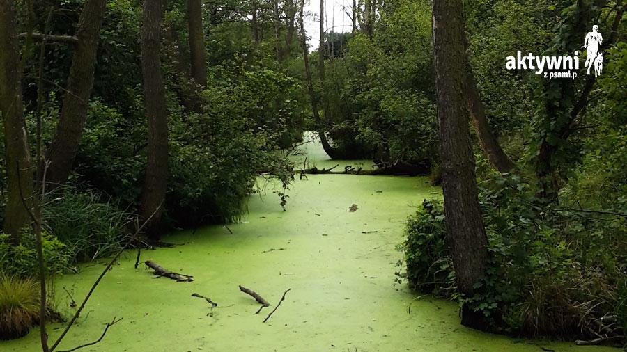 Bolimowski Park Krajobrazowy, foto: Zuzanna Rukat