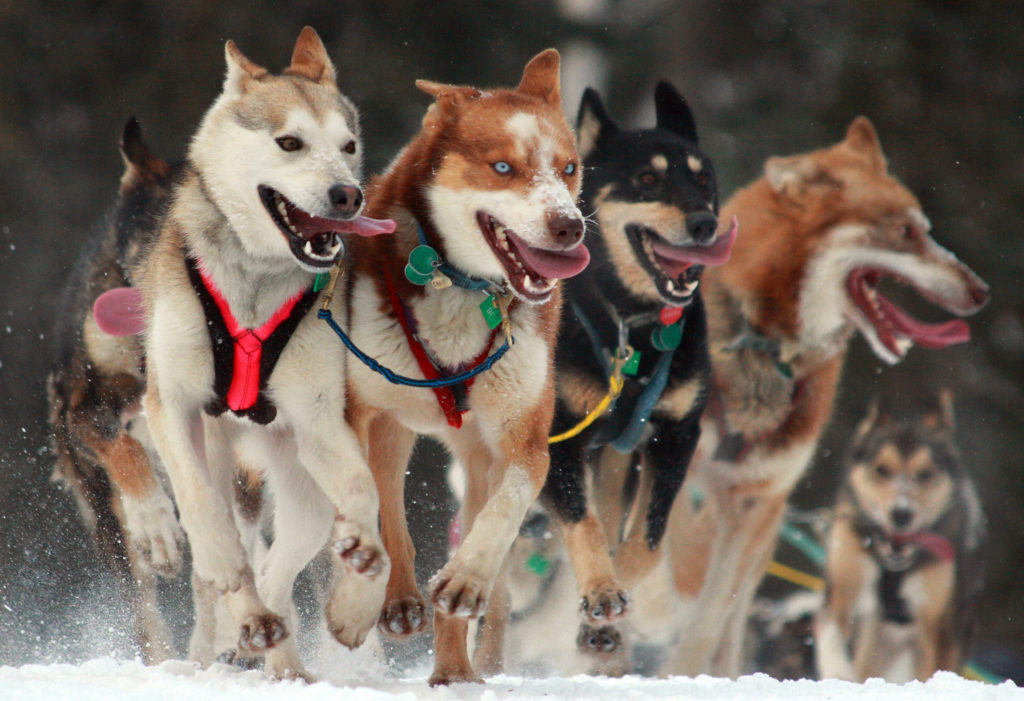 Foto: Alaskan Dude