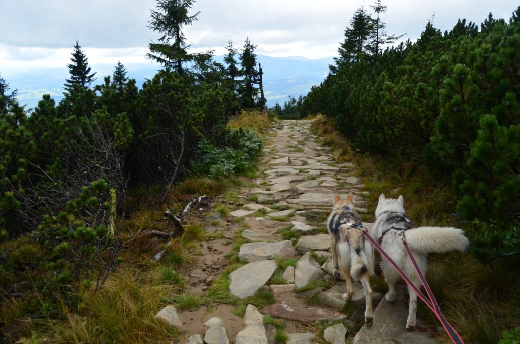 Trekking na Babią Górę z psami czyli dogtrekking